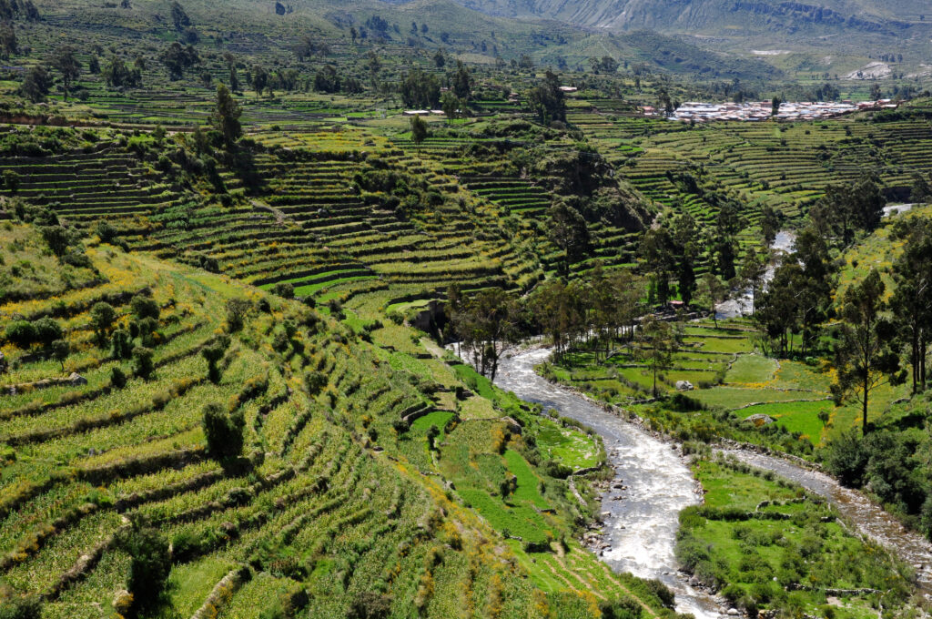 Agricultural terraces in the Andamarca valley, Ayacucho, Perú.